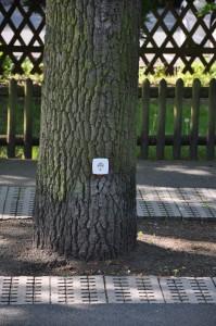 Strom aus dem Baum 2